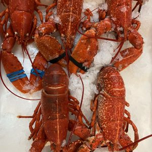 COOKED CORNISH NATIVE LOBSTER 600-700g**Big value this week**